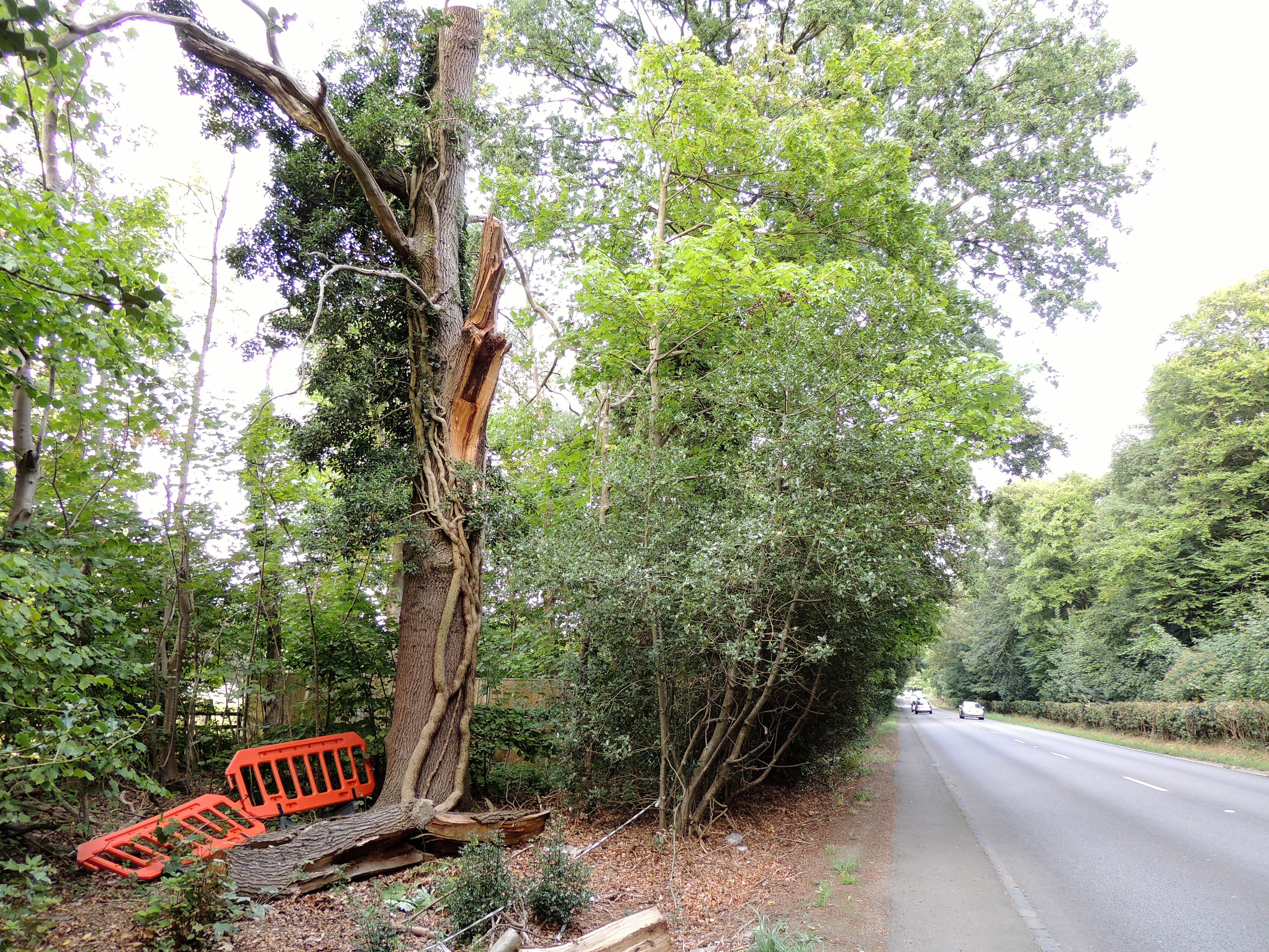 Warren tree failure